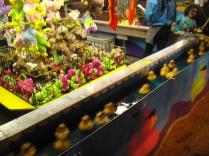 Blind duckies